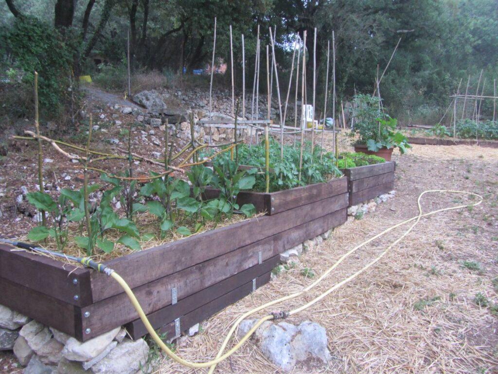 Plantation année précédente, Aubergines, Tomates
